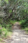Tomaree Coastal Walk